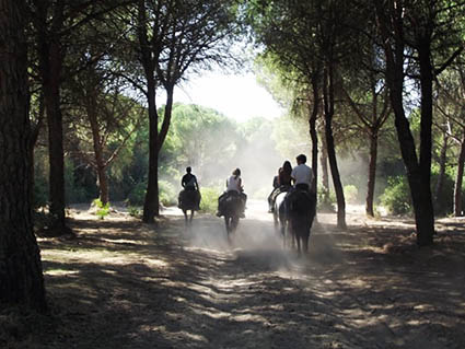 1 3fb horse trail riding forest hacienda dos olivos